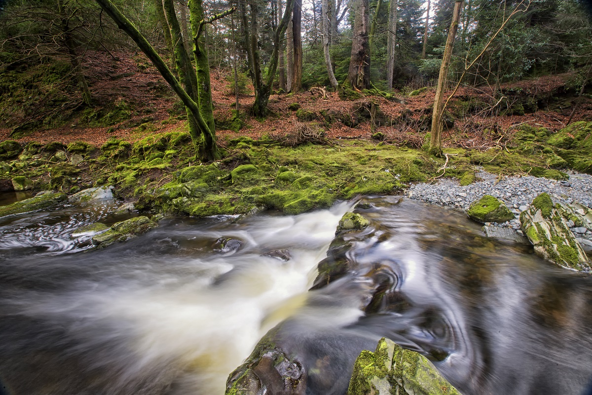 16531_GOT - Tollymore Forest Park