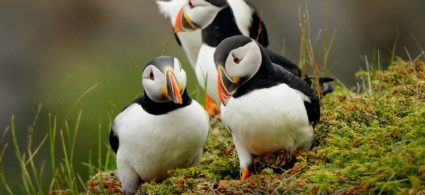 Birdwatching in Irlanda