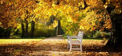 Autunno in Irlanda: dove vedere il foliage