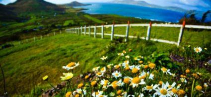 L'Irlanda in fiore
