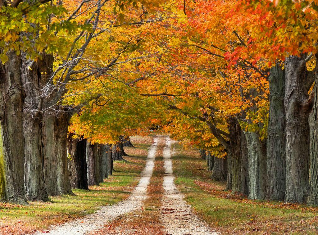kilkenny-autumn-foliage