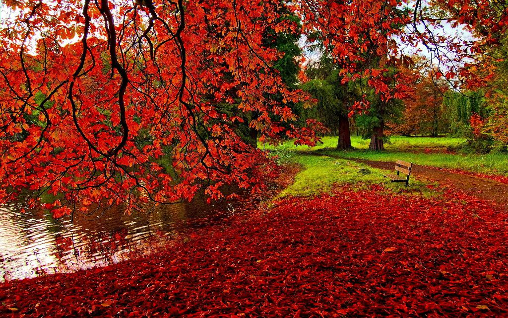 phoenix-park_-dublin-autumn