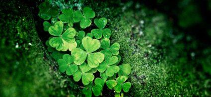Il trifoglio irlandese